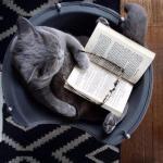 """Лучший способ """"Прокачать"""" себя - читать книги."""