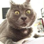 Что-то не так с Кевином: этот кот всегда выглядит удивленным.