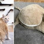 Американская пара взяла из приюта очень толстого кота, чтобы помочь ему похудеть.