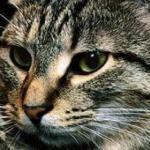 О кошках.   1. около 2/3 суток кошки тратят на сон.