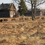 """""""Зона Отчуждения"""" в Чернобыле стала раем для дикой природы."""