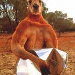 """Этот кенгуру по кличке Роджер живёт в заповеднике """"The Kangaroo Sanctuary"""" в Элис спрингс (Австралия."""