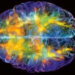 Эти 5 фактов о мозге изменят вашу жизнь.