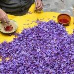 """Шафран - самая дорогая пряность в мире, которую делают из высушенных рыльцев фиолетового цветка """"Крокуса""""."""