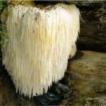 Удивительные разновидности грибов.