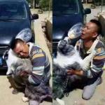 Встреча хозяина и его собаки, которая была украдена.