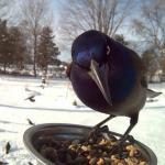 Женщина прикормила птиц и делает потрясающие портреты, пока они едят.