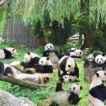 Зоопарк в Токио закрывается каждый год на 2 месяца и еще дополнительно по понедельникам, чтобы звери могли отдохнуть от посетителей.